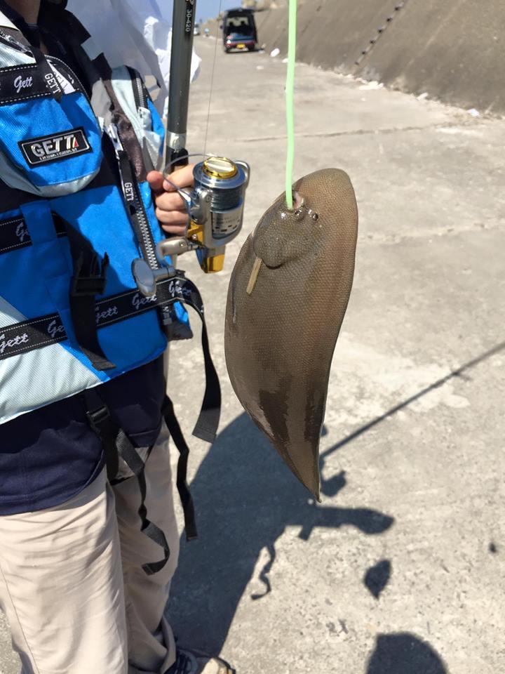 片貝漁港釣り釣果1