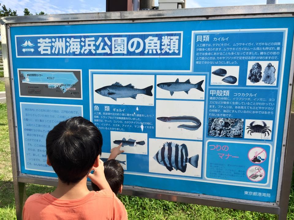 若洲海浜公園13