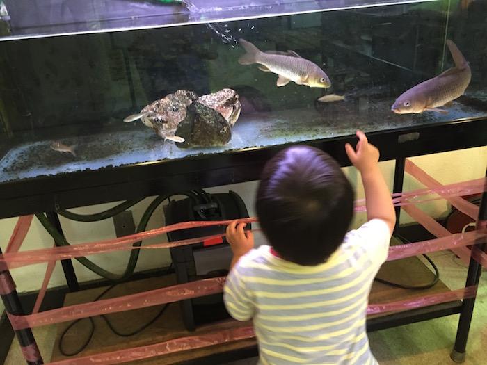 市川動植物園17