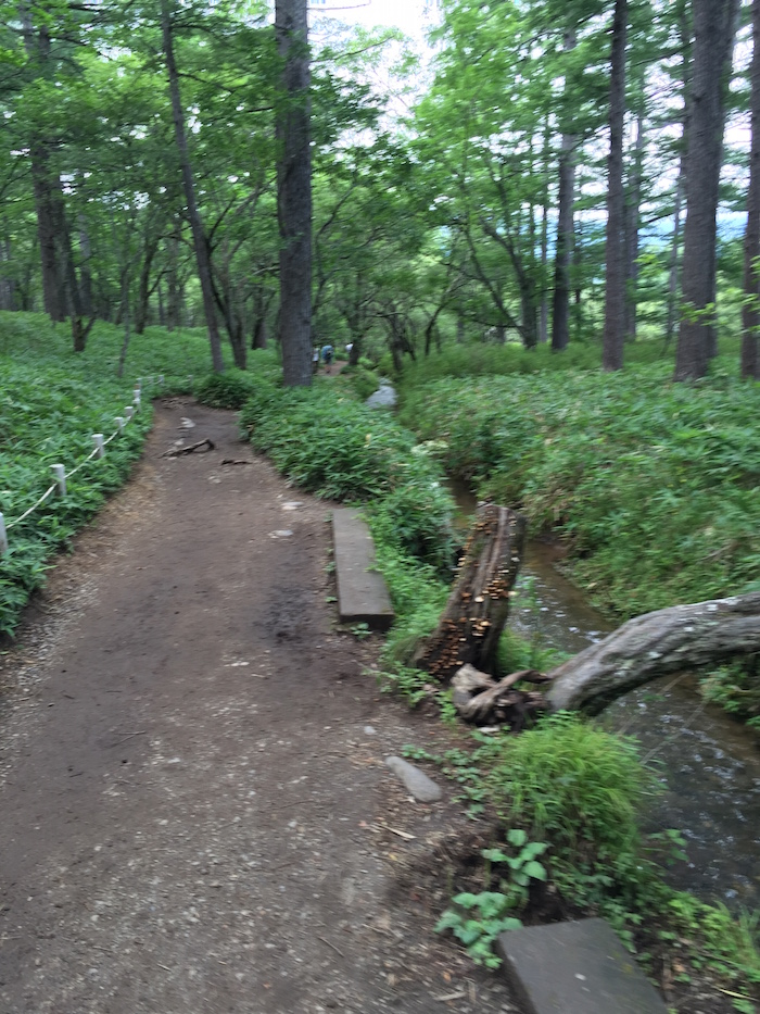 戦場ヶ原ハイキングコース4